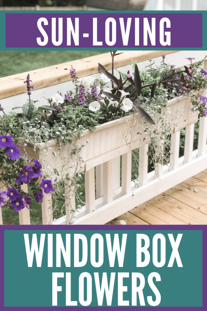 Window Box Flowers That Love Sun Marly Dice